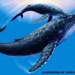 ザトウクジラ(オリジナル)