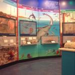 自然史博物館用壁画